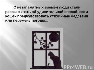 С незапамятных времен люди стали рассказывать об удивительной способности кошек