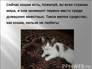 Сейчас кошки есть, пожалуй, во всех странах мира, и они занимают первое место ср