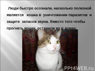 Люди быстро осознали, насколько полезной является кошка в уничтожении паразитов