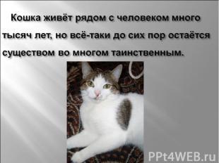 Кошка живёт рядом с человеком много тысяч лет, но всё-таки до сих пор остаётся с
