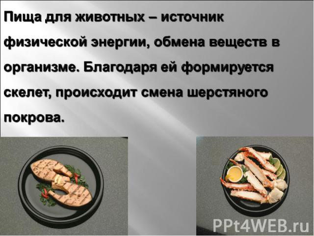 Пища для животных – источник физической энергии, обмена веществ в организме. Благодаря ей формируется скелет, происходит смена шерстяного покрова.