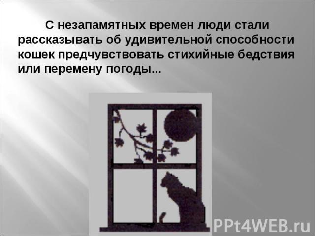 С незапамятных времен люди стали рассказывать об удивительной способности кошек предчувствовать стихийные бедствия или перемену погоды...