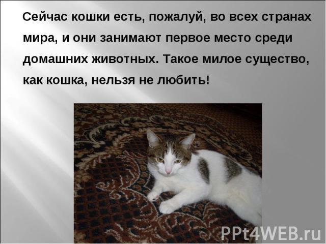 Сейчас кошки есть, пожалуй, во всех странах мира, и они занимают первое место среди домашних животных. Такое милое существо, как кошка, нельзя не любить!
