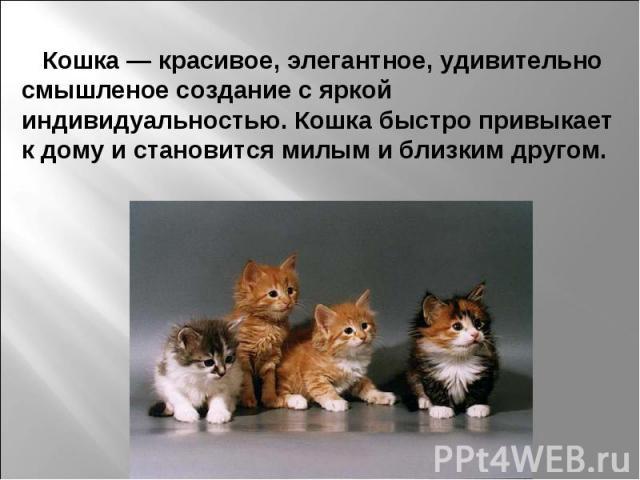 Кошка — красивое, элегантное, удивительно смышленое создание с яркой индивидуальностью. Кошка быстро привыкает к дому и становится милым и близким другом.