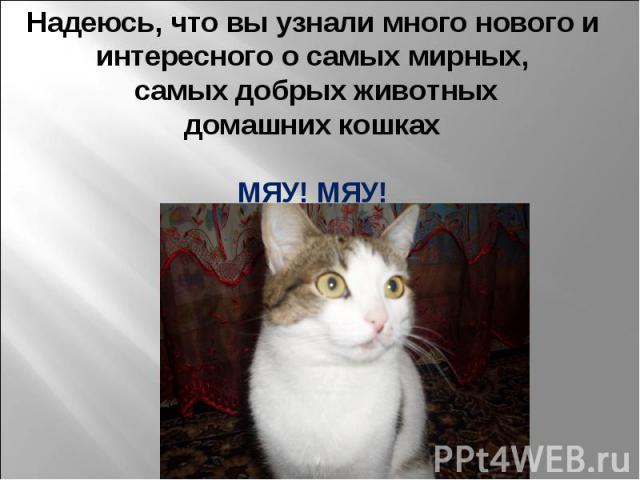 Надеюсь, что вы узнали много нового и интересного о самых мирных, самых добрых животных домашних кошках МЯУ! МЯУ!