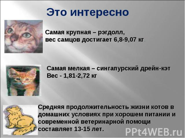 Это интересно Самая крупная – рэгдолл, вес самцов достигает 6,8-9,07 кг. Самая мелкая – сингапурский дрейн-кэт Вес - 1,81-2,72 кг Средняя продолжительность жизни котов в домашних условиях при хорошем питании и современной ветеринарной помощи составл…