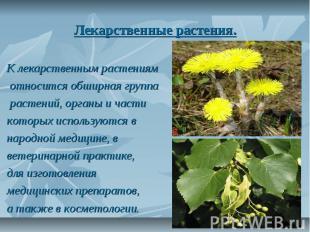 Лекарственные растения. К лекарственным растениям относится обширная группа раст
