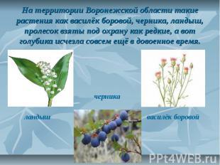 На территории Воронежской области такие растения как василёк боровой, черника, л