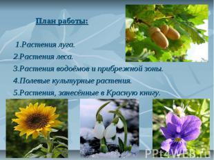 План работы: 1.Растения луга. 2.Растения леса. 3.Растения водоёмов и прибрежной