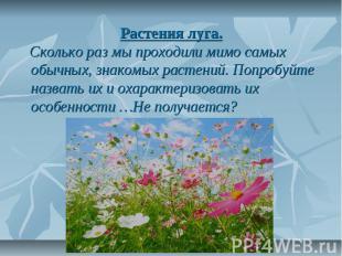 Растения луга. Сколько раз мы проходили мимо самых обычных, знакомых растений. П