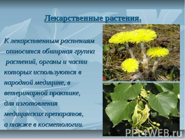 Лекарственные растения. К лекарственным растениям относится обширная группа растений, органы и части которых используются в народной медицине, в ветеринарной практике, для изготовления медицинских препаратов, а также в косметологии.