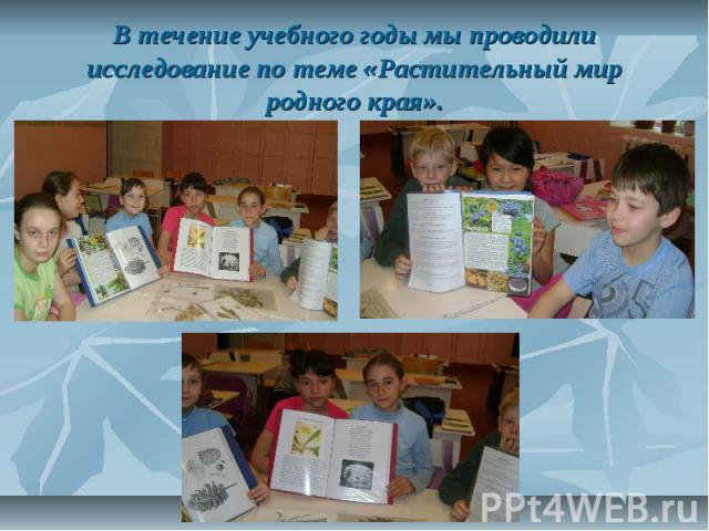 В течение учебного годы мы проводили исследование по теме «Растительный мир родного края».