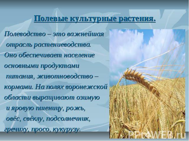 Полевые культурные растения. Полеводство – это важнейшая отрасль растениеводства. Оно обеспечивает население основными продуктами питания, животноводство – кормами. На полях воронежской области выращивают озимую и яровую пшеницу, рожь, овёс, свёклу,…