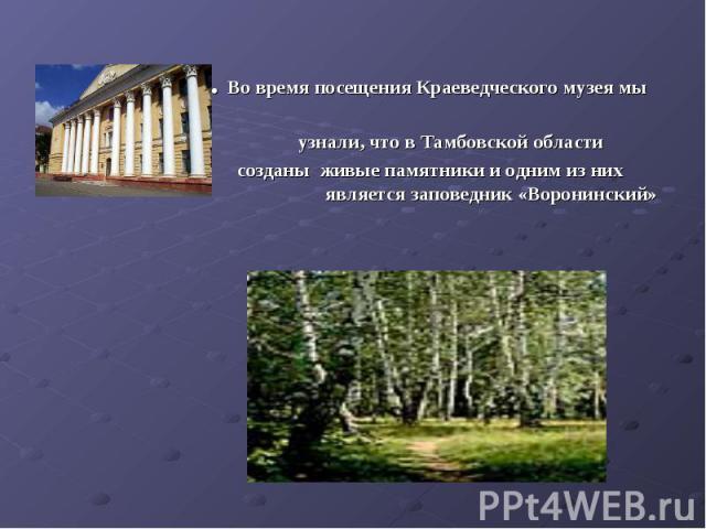 3. Во время посещения Краеведческого музея мы узнали, что в Тамбовской области созданы живые памятники и одним из них является заповедник «Воронинский»