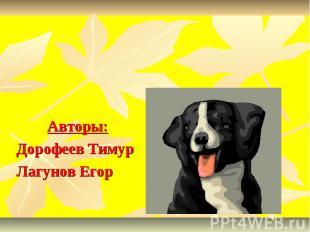 О собаках Авторы: Дорофеев Тимур Лагунов Егор