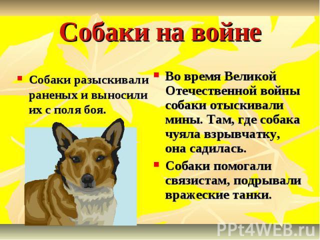 Собаки на войне Собаки разыскивали раненых и выносили их с поля боя. Во время Великой Отечественной войны собаки отыскивали мины. Там, где собака чуяла взрывчатку, она садилась. Собаки помогали связистам, подрывали вражеские танки.
