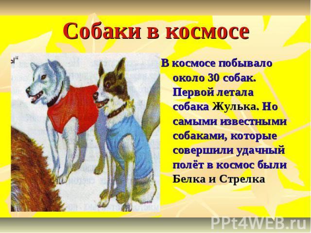 Собаки в космосе В космосе побывало около 30 собак. Первой летала собака Жулька. Но самыми известными собаками, которые совершили удачный полёт в космос были Белка и Стрелка