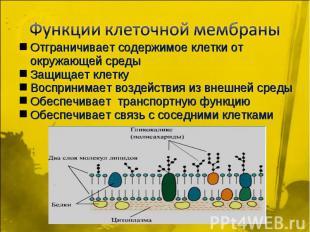 Функции клеточной мембраны Отграничивает содержимое клетки от окружающей среды З