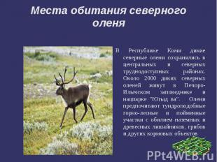 Места обитания северного оленяВ Республике Коми дикие северные олени сохранились