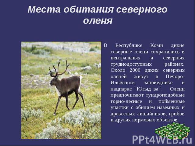 Места обитания северного оленяВ Республике Коми дикие северные олени сохранились в центральных и северных труднодоступных районах. Около 2000 диких северных оленей живут в Печоро-Илычском заповеднике и нацпарке