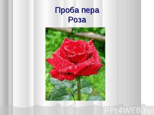 Проба пера Роза
