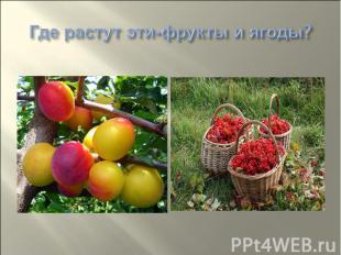 Где растут эти-фрукты и ягоды?