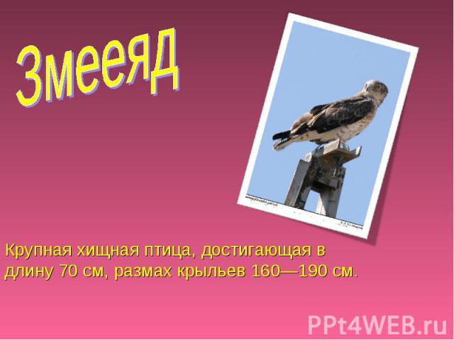 Змееяд Крупная хищная птица, достигающая в длину 70 см, размах крыльев 160—190 см.