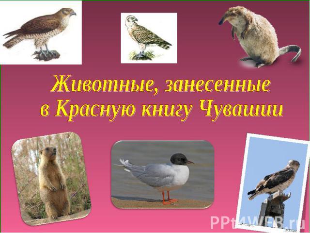 Животные, занесенные в Красную книгу Чувашии