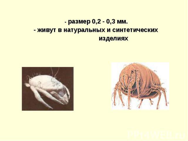- размер 0,2 - 0,3 мм. - живут в натуральных и синтетических изделиях