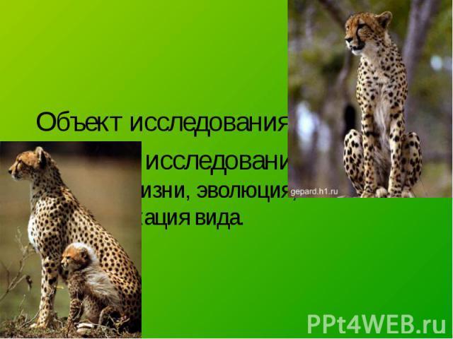 Объект исследования – гепард. Предмет исследования – условия жизни, эволюция, классификация вида.