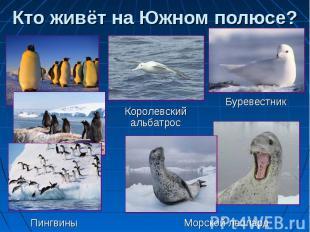 Кто живёт на Южном полюсе? Королевский альбатрос Буревестник Пингвины Морской ле