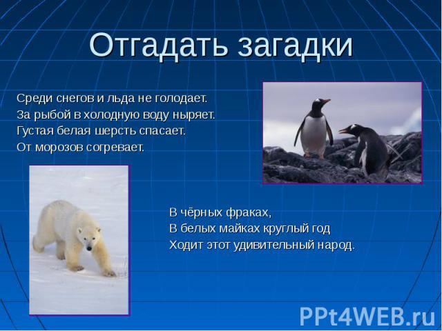 Отгадать загадки Среди снегов и льда не голодает. За рыбой в холодную воду ныряет. Густая белая шерсть спасает. От морозов согревает. В чёрных фраках, В белых майках круглый год Ходит этот удивительный народ.