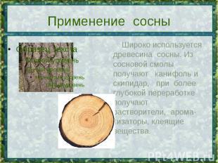 Применение сосны Широко используется древесина сосны. Из сосновой смолы получают