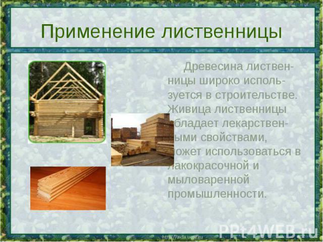 Применение лиственницы Древесина листвен-ницы широко исполь-зуется в строительстве. Живица лиственницы обладает лекарствен-ными свойствами, может использоваться в лакокрасочной и мыловаренной промышленности.