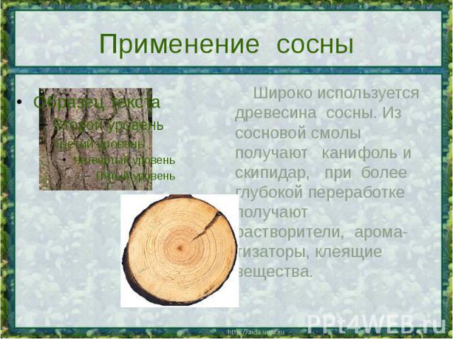 Применение сосны Широко используется древесина сосны. Из сосновой смолы получают канифоль и скипидар, при более глубокой переработке получают растворители, арома-тизаторы, клеящие вещества.