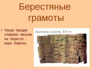 Берестяные грамотыНаши предки славяне писали на бересте - коре берёзы.