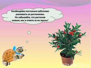 Необходимо постоянно заботливо ухаживать за растениями. Не забывайте, что растен