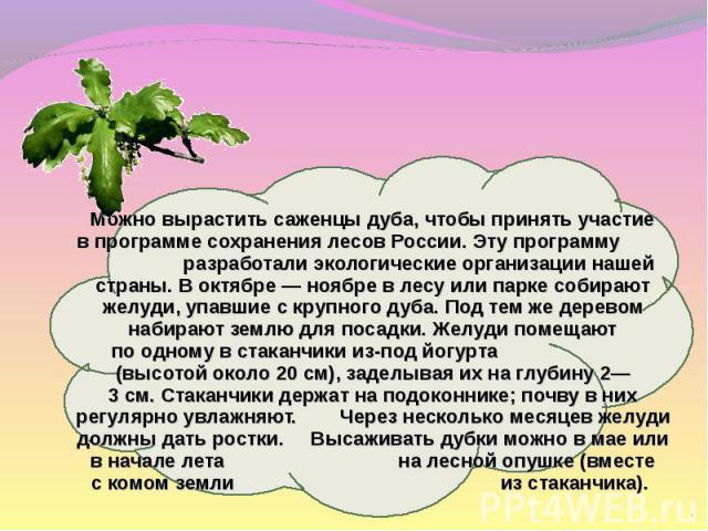 Можно вырастить саженцы дуба, чтобы принять участие впрограмме сохранения лесов России. Эту программу разработали экологические организации нашей страны. Воктябре— ноябре влесу или парке собирают желуди, упавшие скрупного дуба. Под темже дерев…