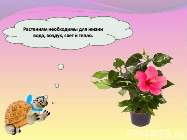 Растениям необходимы для жизни вода, воздух, свет и тепло.