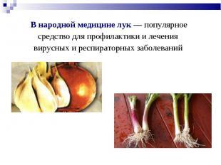 В народной медицине лук — популярное средство для профилактики и лечения вирусны