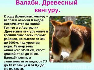 Валаби. Древесный кенгуру. К роду Древесных кенгуру – валлаби относят 6 видов. В