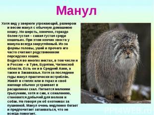 Манул Хотя вид у зверюги угрожающий, размером и весом манул с обычную домашнюю к