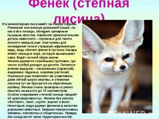Фенек (степная лисица) Эта миниатюрная лиса живёт на севере Африки. Размером она