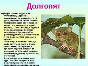 Долгопят Ещё один примат. Водится на Филиппинах, Борнео и прилегающих островах.