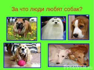 За что люди любят собак?