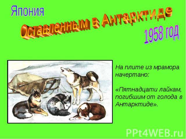 Оставленным в Антарктиде На плите из мрамора начертано: «Пятнадцати лайкам, погибшим от голода в Антарктиде».