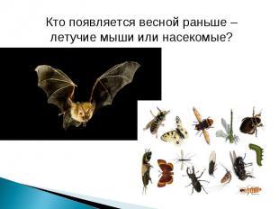 Кто появляется весной раньше – летучие мыши или насекомые?