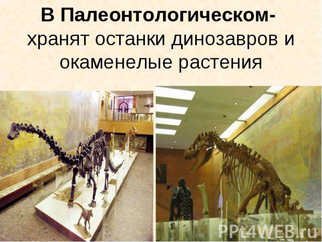 В Палеонтологическом- хранят останки динозавров и окаменелые растения