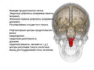 Функции продолговатого мозга Защитные рефлексы (например кашель, чихание). Жизне