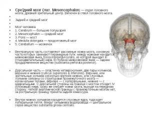 Сре дний мозг (лат. Mesencephalon) — отдел головного мозга, древний зрительный ц